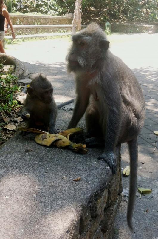Vegan Bali 27